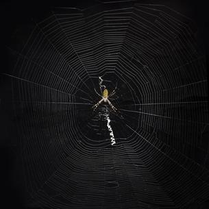 蜘蛛の巣の写真素材 [FYI01168180]