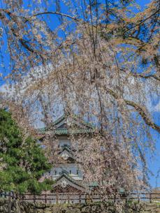 春の移転した弘前城の天守の風景の写真素材 [FYI01168347]