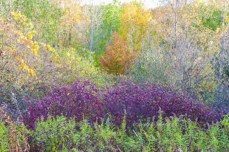 自然 自然素材 風景 風景素材 森 森素材 黄葉 紅葉 葉 海外 カナダ オンタリオの写真素材 [FYI01168402]
