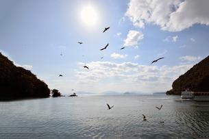 京都府伊根湾のトビの写真素材 [FYI01168470]
