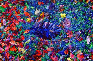 京都大江山の紅葉の写真素材 [FYI01168475]