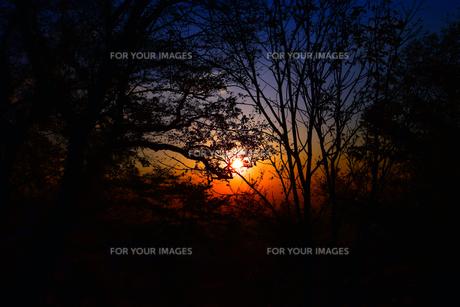 京都大江山の日の出の写真素材 [FYI01168476]