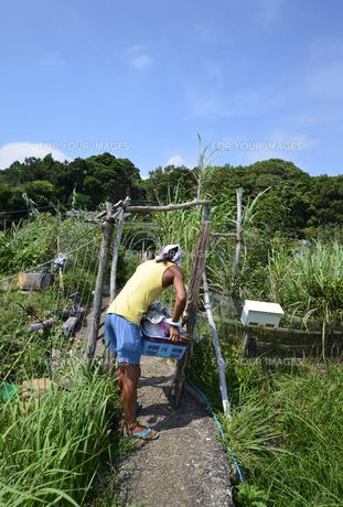 古座川の農夫の収穫の写真素材 [FYI01168541]
