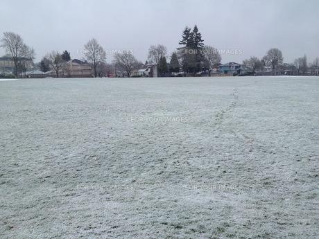 風景 風景素材 自然 自然素材 背景 背景素材 霜 凍結 朝靄 芝生 海外 カナダの写真素材 [FYI01168663]