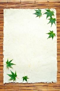 白い紙と緑のもみじ すだれ背景の写真素材 [FYI01168768]