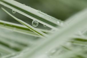 葉の上の水滴のイラスト素材 [FYI01168870]