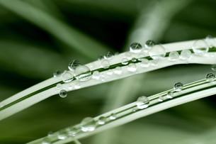 葉の上の水滴のイラスト素材 [FYI01168871]