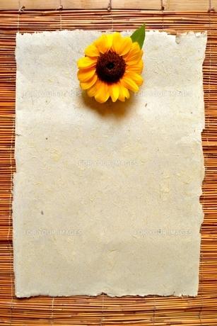 紙の上の1輪のひまわり すだれ背景の写真素材 [FYI01168970]