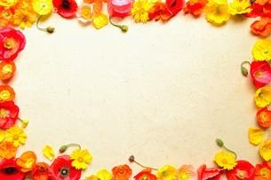 ポピーの花の写真素材 [FYI01168983]