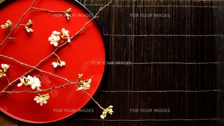 漆塗りのおぼんにのせた桜の写真素材 [FYI01169077]