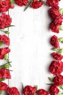 赤いカーネーションのフレームの写真素材 [FYI01169808]