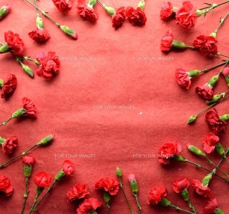赤いカーネーションのフレーム 赤色背景の写真素材 [FYI01169922]