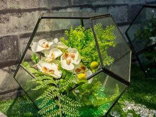 インテリア 観葉植物の写真素材 [FYI01169998]