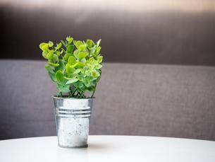 インテリア 観葉植物の写真素材 [FYI01170001]