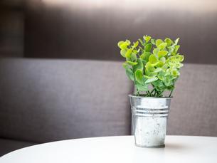 インテリア 観葉植物の写真素材 [FYI01170002]