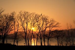黄昏時の琵琶湖畔の写真素材 [FYI01170134]
