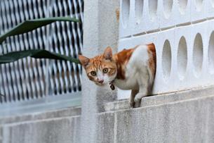 宮古島/団地の飼い猫の写真素材 [FYI01170282]