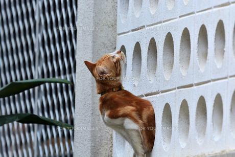 宮古島/団地の飼い猫の写真素材 [FYI01170283]