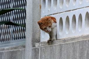 宮古島/団地の飼い猫の写真素材 [FYI01170286]