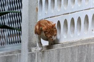 宮古島/団地の飼い猫の写真素材 [FYI01170287]