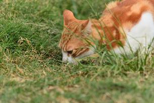 宮古島/団地の飼い猫の写真素材 [FYI01170301]