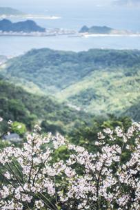 風景 背景 植物 森 山 海 花 桜 素材 海外 旅 旅行 トラベル 台湾 九份の写真素材 [FYI01170327]
