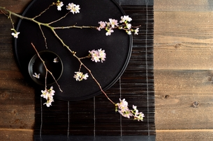 桜の枝と黒いおぼんの写真素材 [FYI01170578]