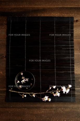 桜の枝 黒いすだれ背景の写真素材 [FYI01170595]