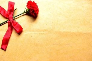 一輪の赤いカーネーションとリボン クラフト紙背景の写真素材 [FYI01170600]