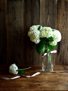 花瓶に活けた白い紫陽花とリボンの写真素材 [FYI01170605]