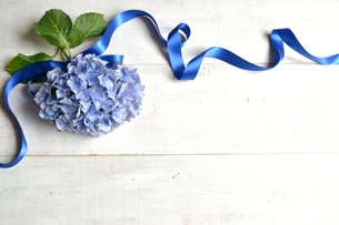 青色の紫陽花とリボン 白木材背景の写真素材 [FYI01170631]