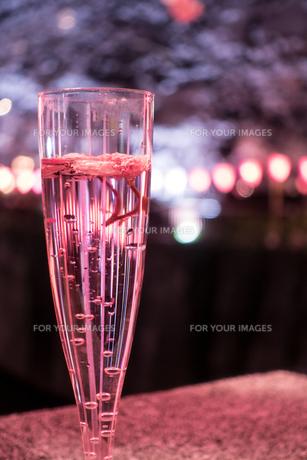 お酒を飲みながら花見の写真素材 [FYI01170725]