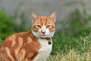 宮古島/団地の飼い猫の写真素材 [FYI01170895]