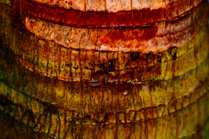 マクロの見る樹皮の写真素材 [FYI01171067]