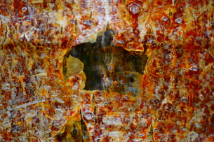 マクロの見る樹皮の写真素材 [FYI01171086]