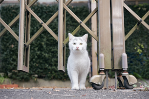 日本の屋外で暮らす子猫の写真素材 [FYI01171102]