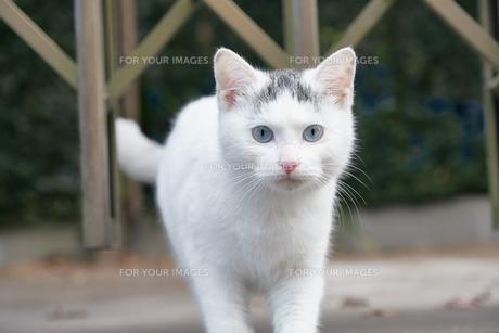 日本の屋外で暮らす子猫の写真素材 [FYI01171103]