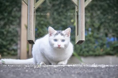 日本の屋外で暮らす子猫の写真素材 [FYI01171105]