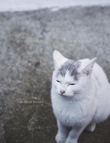 日本の屋外で暮らす子猫の写真素材 [FYI01171107]
