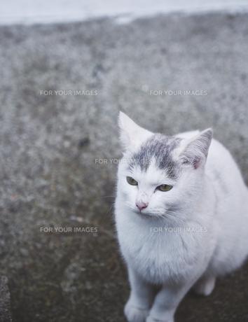 日本の屋外で暮らす子猫の写真素材 [FYI01171108]