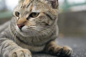 日本の屋外で暮らす猫の写真素材 [FYI01171112]