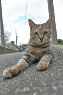 日本の屋外で暮らす猫の写真素材 [FYI01171126]