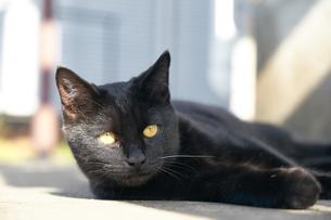 日本の屋外で暮らす猫の写真素材 [FYI01171130]