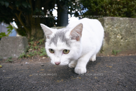 日本の屋外で暮らす子猫の写真素材 [FYI01171133]