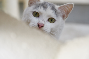 ブロックの隙間から覗く子猫の写真素材 [FYI01171134]