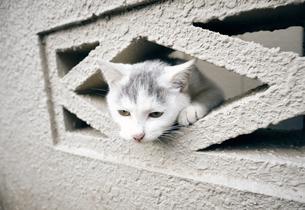ブロックの隙間から顔を出す子猫の写真素材 [FYI01171136]