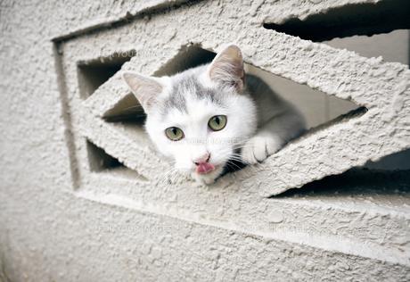 ブロックの隙間から顔を出す子猫の写真素材 [FYI01171138]