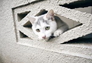 ブロックの隙間から顔を出す子猫の写真素材 [FYI01171139]