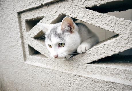 ブロックの隙間から顔を出す子猫の写真素材 [FYI01171140]