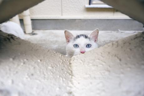 ブロックの隙間から覗く子猫の写真素材 [FYI01171141]